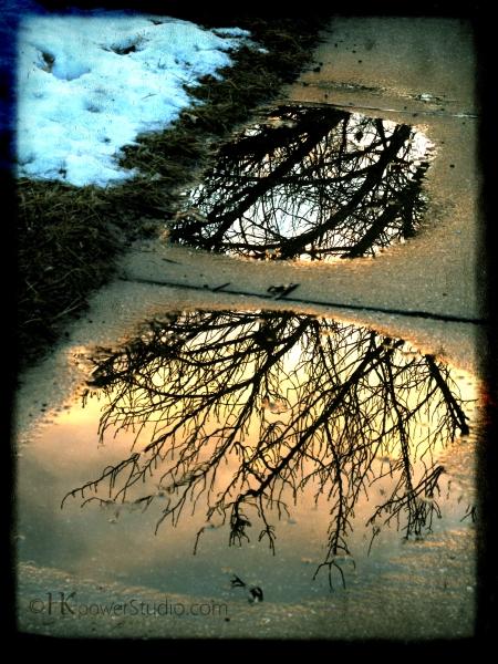 walking: tree reflection