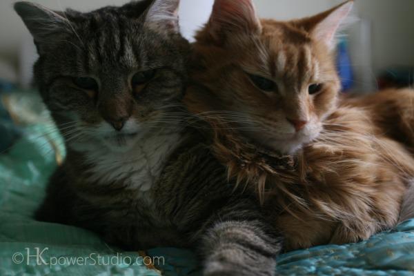 Best Friend Kitties